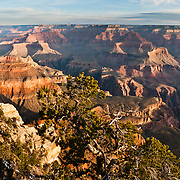 Yavapai Point, South Rim of Grand Canyon National Park, Arizona, USA. Grand Canyon began forming at least 5 to 17 million years ago and now exposes a geologic wonder, a column of well-defined rock layers dating back nearly two billion years at the base. While the Colorado Plateau was uplifted by tectonic forces, the Colorado River and tributaries carved Grand Canyon over a mile deep (6000 feet / 1800 meters), 277 miles (446 km) long and up to 18 miles (29 km) wide. (Panorama stitched from 2 photos.)