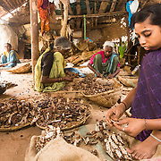 CAPTION: Nirmala has speech problems owing to jaw disfigurement. Thanks to Mobility India, she has benefited from surgery, and now works as a tamarind de-seeder. Soon, she will be taking up livelihood training for other income-earning activities. LOCATION: Doddarayapete (village), Kasaba (hobli), Chamrajnagar (district), Karnataka (state), India. INDIVIDUAL(S) PHOTOGRAPHED: Nirmala.