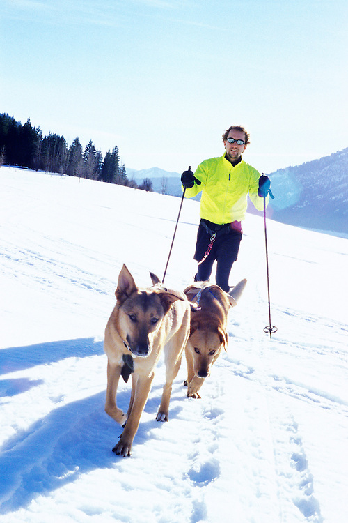 A man cross country skiing behind his two dogs who are attached to him via leashes and harness.