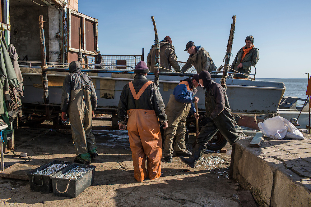 Fishermen unload their catch to send it to market on Saturday, April 11, 2015 in Siedove, Ukraine.
