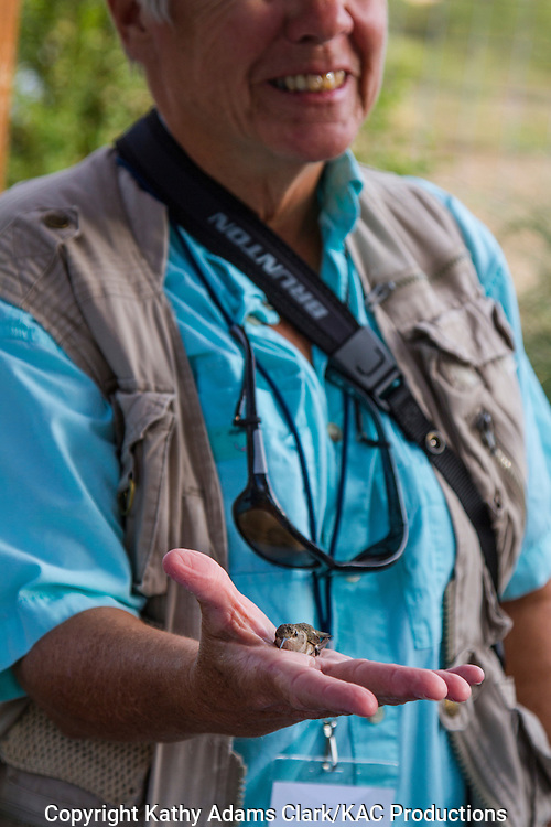 Releasing a hummingbird, from Kelly Bryant, banding hummingbirds, Marathon, Texas, west Texas,