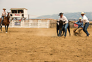 Wilsall Ranch Rodeo, Wild Cow Milking Competition, Milee Malone, Ryan Malone, Justin O'Hair, Tim McGrady. Knock'em Flat Cattle Co team, Montana