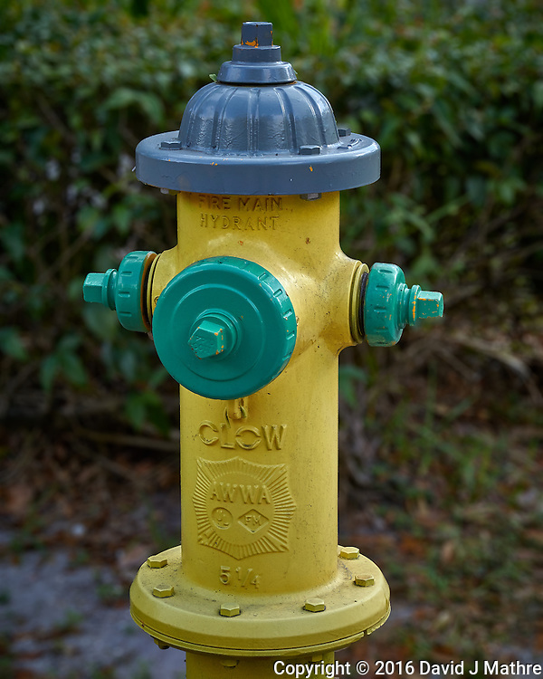 """Multi-colored fire hydrant in the """"Old Northeast"""" section of St. Petersburg, Florida. Image taken with a Leica T camera and 55-135 mm lens (ISO 200, 55 mm, f/7, 1/160 sec)."""