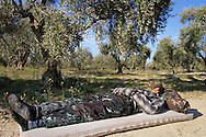 A Free Syrian Army soldier sleeps under an olive tree after a shift guarding the farmland surrounding Al Janoudiyah, Syria