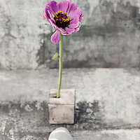 Contemplative Still Life Photography. Imperfect flower in square ikebana vase, with a single stone.