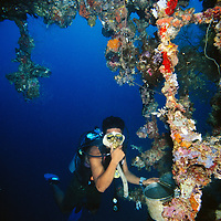 Dive master reveals artifacts found on the Toa Maru, once a   Japanese transport ship, off of Gizo, Solomon Islands.