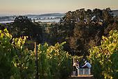 Open Claim vineyards Media
