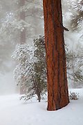 A winter scene, Grand Canyon National Park.