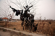 Black cloth hung in a tree in the Serbian cemetery in Prahovo...Matt Lutton for the Financial Times