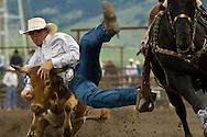 Steer Wrestler, Bulldogger, Montana High School Rodeo Finals 2009, Bozeman, Montana