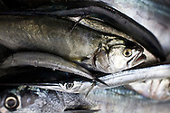 fresh fish, Sinop, Turkey