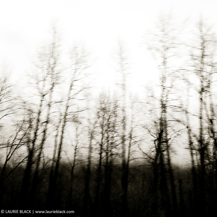 B&W photograph of trees in the Columbia Gorge on a winter day