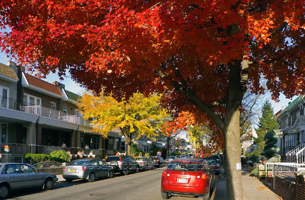 Fall tree in Brooklyn, NYC, USA.
