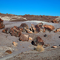 North America, USA, Arizona, Petrified Forest National Park. Crystal Forest badlands.