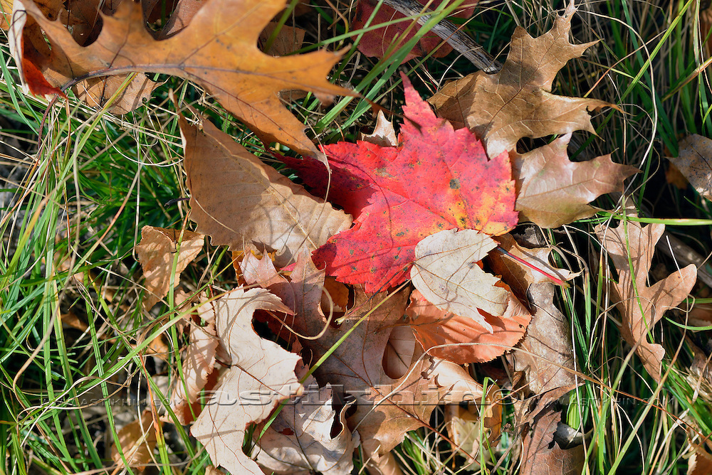 Leaves and Grass.
