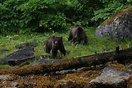 10: INSIDE PASSAGE BROWN BEARS