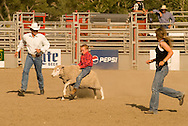 Mutton Busting, riding sheep, Kids rodeo at Livingston, Montana