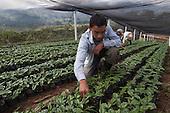 Fairtrade Coffee Co-Ops