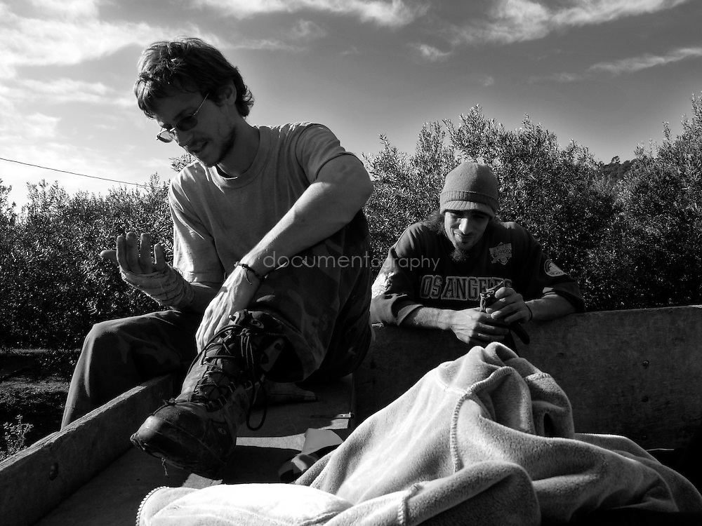 Olive pickers rest during a break, Domaine du Jasson , La Londe Les Maures, France.