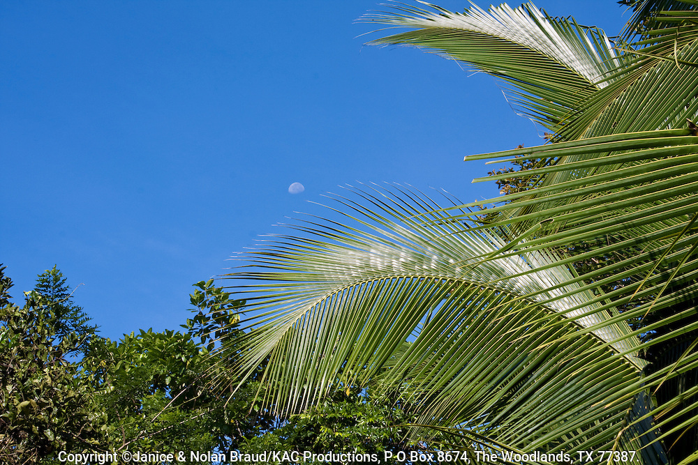 Patterns in Palm Leaves - Driveway of Coconut Palm Trees at the Sarapiqui Neotropic center, northeastern Costa Rica.