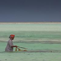 Farming sea weed on Paje beach, Zanzibar