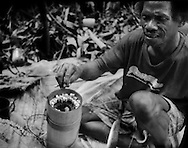 Even under such tremendous pressure from territorial encroachment, the Batek Negrito people try to maintain their traditional way of life.  Batek man carefully holds up a blowpipe dart, coated with deadly poison from the ipoh tree, from a bamboo quiver.  Batek will not use these dart if they have cuts on their hands because they could poison themselves.  Near Luala Koh, Kelantan, Malaysia.