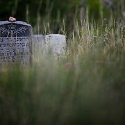 """SHOT 8/7/09 7:29:00 PM -  The Golden Hill Cemetery, one of the few sites along Colfax on the National Register of Historic Places, is the final home to more than 2,000 people who died of tuberculosis in the early 1900s. The Jewish cemetery, 12000 W. Colfax, has more than 8,000 gravestones. Colfax Avenue is the main street that runs east and west through the Denver-Aurora metropolitan area in Colorado. As U.S. Highway 40, it was one of two principal highways serving Denver before the Interstate Highway System was constructed. In the local street system, it lies 15 blocks north of the zero point (Ellsworth Avenue, one block south of 1st Avenue). For that reason it would normally be known as """"15th Avenue"""" but the street was named for the 19th-century politician Schuyler Colfax. On the east it passes through the city of Aurora, then Denver, and on the west, through Lakewood and the southern part of Golden. Colloquially, the arterial is referred to simply as """"Colfax"""", a name that has become associated with prostitution, crime, and a dense concentration of liquor stores and inexpensive bars. Playboy magazine once called Colfax """"the longest, wickedest street in America."""" However, such activities are actually isolated to short stretches of the 26-mile (42 km) length of the street. Periodically, Colfax undergoes redevelopment by the municipalities along its course that bring in new housing, trendy businesses and restaurants. Some say that these new developments detract from the character of Colfax, while others worry that they cause gentrification and bring increased traffic to the area. (Photo by Marc Piscotty / © 2009)"""