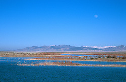 &quot;Rye Patch Reservoir, Nevada&quot; - Rye Patch Reservoir is located 22 miles north of Lovelock, Nevada on Hwy 80, along the Humboldt River. <br />