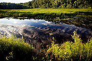 Reflection in the pond in Waushara County, Wisconsin.