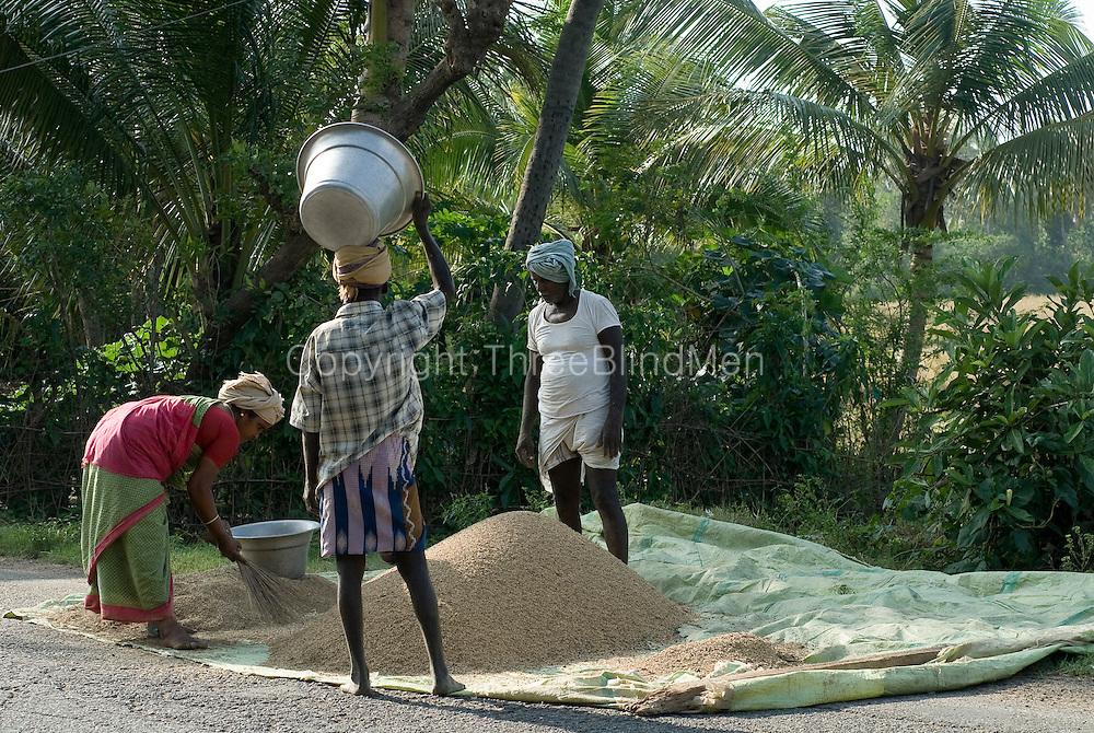 India Rice Harvest Threshing South India