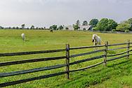 Horse Farm, Halsey Ln, Water Mill, Long Island, NY