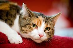 2010-06-02_Pippin Go Cat