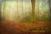 autumn foliage carpeting a forest path