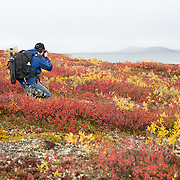 Peterson's Point Lake Lodge is located just north of the tree line in the Canadian Northwest Territories. It used to be a hunting lodge but since 2009 when the caribou hunt was cancelled it's been mainly used as a fishing lodge. The lodge is run and maintained by the Peterson's. Chad and Margaret were my hosts while I spent 5 days photographing the caribou and tundra. Their hospitality and staff were incredible. I had guides that were always up for a venture on the water or the land in search of caribou and photographs. I can't wait to go again.