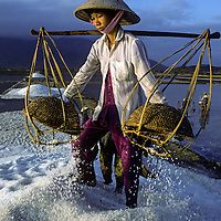Vietnamese women harvest salt extracted from shallow ponds that dry seawater.