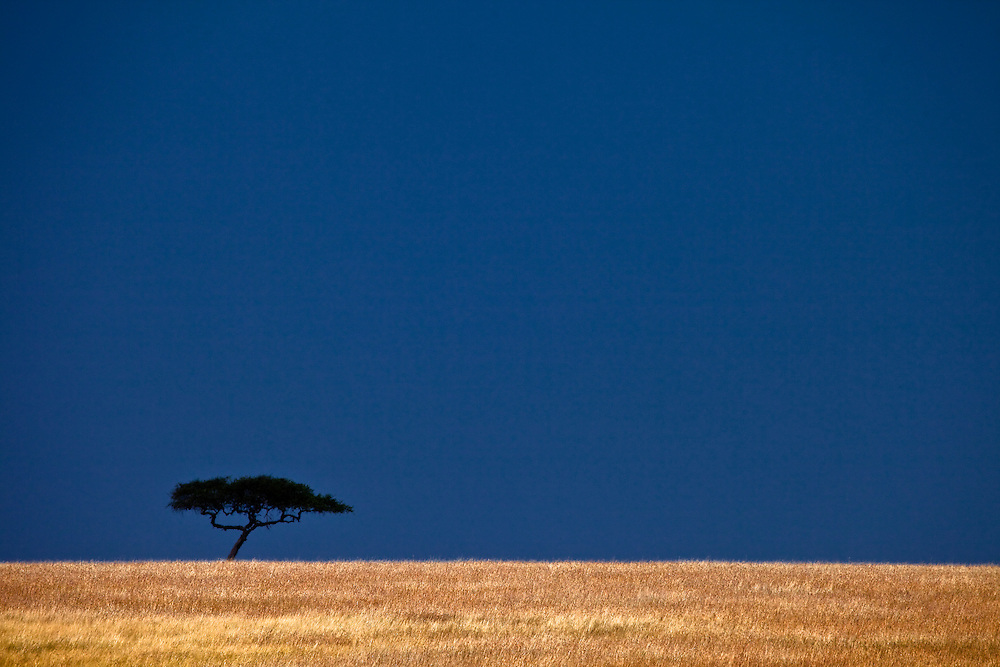 Where the golden plains meet a deep blue sky in the Maasai Mara