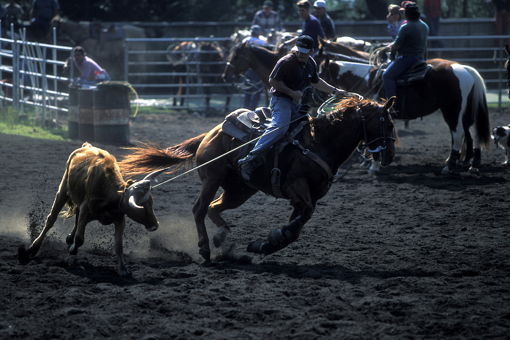 USA, Hawaii, Big Island, Waimea, Local cowboys compete in calf roping Paniolo rodeo near Parker Ranch