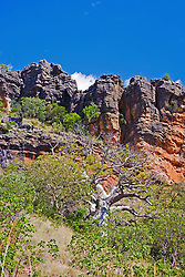 A lone boab grows beside a rocky outcrop on the Gibb River Road.