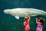 351021-1041G.Huey ~ Copyright: George H.H. Huey ~ Two young girls enjoy the live Beluga whales at the Mystic Aquarium.  Mystic, Connecticut.