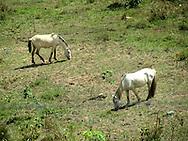 Parque Nacional Altos de Campana, Chicá. ©Victoria Murillo/istmophoto.com
