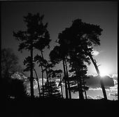 Sutton Hoo, Suffolk 2014  [National Trust]