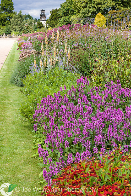 A richly planted herbaceous border in the Italian Garden at Trentham Gardens, Staffordshire - photographed in August.