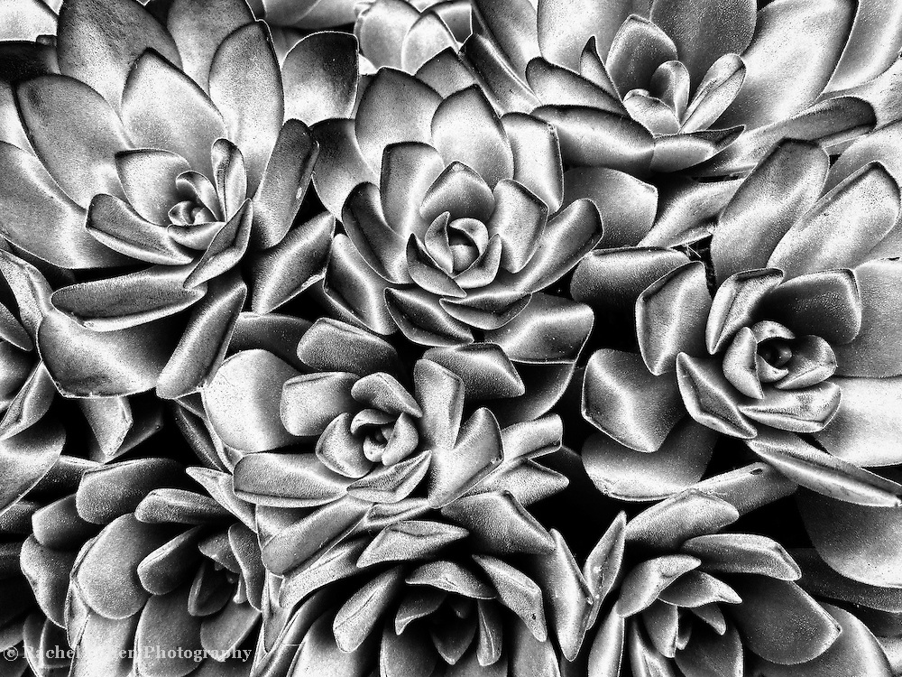 """Succulent Abstract"""