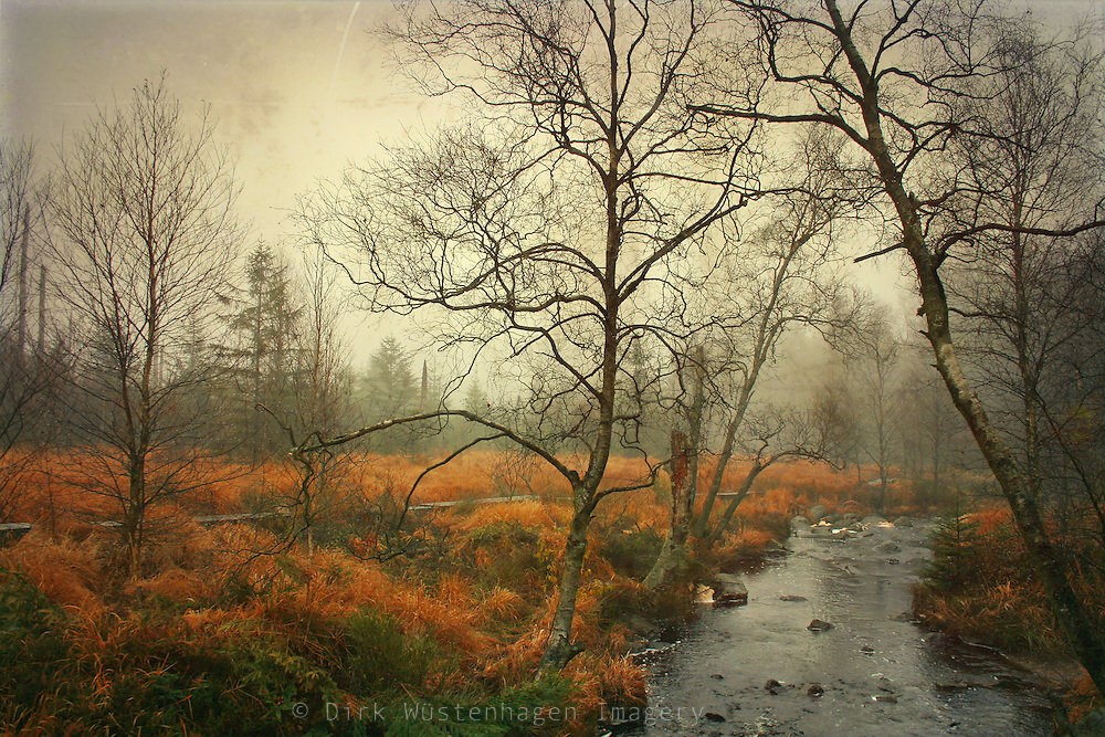 Creek in the High Fens, Belgium on a rainy November day.
