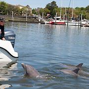 Hilton Head Island Dolphin Cruise 04-18-2009