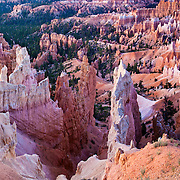 Early morning light at Sunrise Point in Bryce Canyon National Park in Utah. Soft light just before sunrise gives the hoodoos a pink cast.