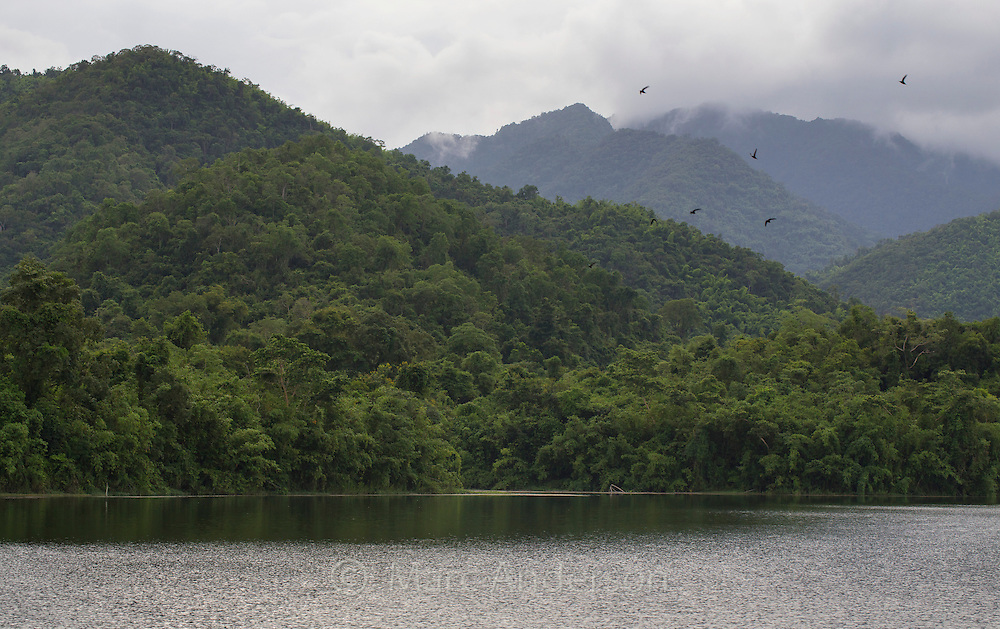 View of rainforest and hills in Kaeng Krachan National Park, Thailand