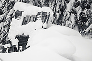 The last wall of an abandoned boom town house succumbs to the weight of another winter in British Columbia.