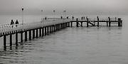 Orakei wharf on a misty morning. Auckland New Zealand.