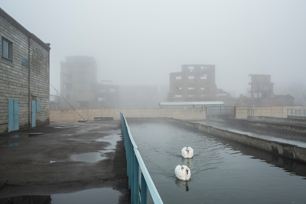 A pair of swans swim in a pool of water pumped out to keep the mine from flooding at the Shcheglovskaya Coal Mine on Friday, March 25, 2016 in Makiivka, Ukraine.